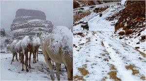 snowing in Saudi Arabia's deserts, সৌদি আরবে বরফ পড়া